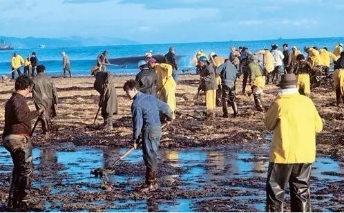 """人们正在努力""""修复""""被石油泄漏污染的海岸"""